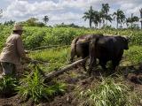 Cuba denuncia causas de pérdidas millonarias en la agricultura
