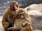 Brexit: Reino Unido vota que los animales son incapaces de sentir