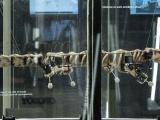Esqueleto de reptil de 300 millones de años 'resucita' como robot
