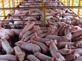 Potencia Cuba inversión extranjera para la producción de carne