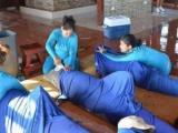 Delfines evacuados en Cienfuegos están sanos