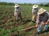 Excluyen a los campesinos cubanos del Foro de la Sociedad Civil en la Cumbre de las Américas