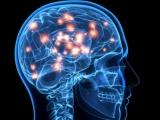 Cuba, China y Canadá cooperarán en estudio del cerebro